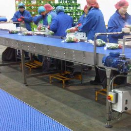 pack house vegetable packing conveyor