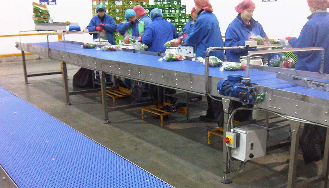 pack house vegetable packing conveyor